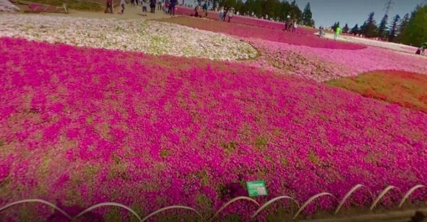 羊山公園(芝桜の丘)